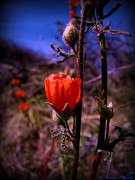 Watson Lake Photos - Orange Globe Mallows and Blue Arizona Skies by Aaron Burrows