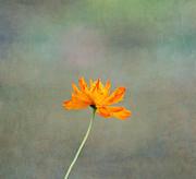 Kim Hojnacki - Orange Glow