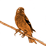 Goldfinch Digital Art Prints - Orange Lesser Goldfinch - 2235 F S M Print by James Ahn