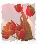 Tulip Pics Photos - Orange Light by Debra  Miller