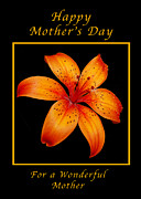 Michael Peychich - Orange Lily Mothers Day Card