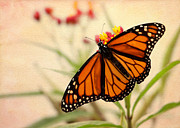 Glass Wall Posters - Orange Mariposa Poster by Sabrina L Ryan