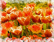 Flower Design Photo Prints - Orange Princess Fringed Tulips Print by Debra  Miller
