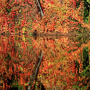 Autumn Scene Framed Prints - Orange Reflections Framed Print by Art Block Collections