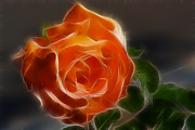 Orange Rose 6220-fractal Print by Gary Gingrich Galleries