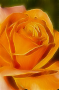 Orange Rose 6291-fractal Print by Gary Gingrich Galleries