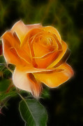 Orange Rose 6292-fractal Print by Gary Gingrich Galleries