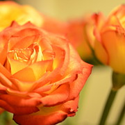 Orange Rose Print by Corinne Rhode