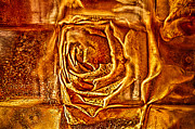 Floral Glass Art Metal Prints - Orange Rose Metal Print by Omaste Witkowski