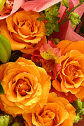 Amy Vangsgard Metal Prints - Orange Roses Metal Print by Amy Vangsgard