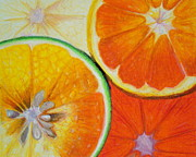 Grapefruit Drawings Posters - Orange Slices Poster by Caroline  Reid