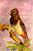 Jason Sentuf - Orange-spotted Bulbul