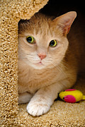 Mouse Posters - Orange Tabby Cat in Cat Condo Poster by Amy Cicconi