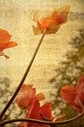 Michelle Calkins - Orange Tulips
