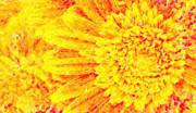 Difficulties Love Posters - Orange Yellow Gerber Daisies Macro Art Poster by MotionAge Art and Design - Ahmet Asar