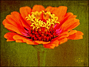 Austin Digital Art Posters - Orange Zinnia Flower Poster by Carol F Austin