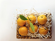 Cindy Garber Iverson - Oranges