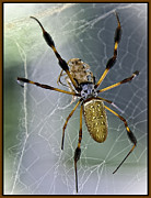 Creepy Digital Art Posters - Orb Spider Poster by Lynn Andrews