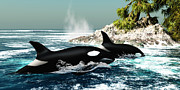 Mammals Digital Art Prints - Orca Killer Whales Print by Corey Ford