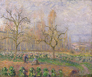 Vegetable Garden Posters - Orchard at Pontoise Poster by Camille Pissarro