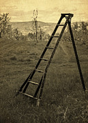 Wooden Stairs Photo Prints - Orchard Ladder Print by Edward Fielding