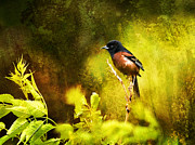 Oriole Digital Art Posters - Orchard Oriole Poster by J Larry Walker