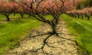 Orton Effect Prints - Orchard Print by Vickie Szumigala