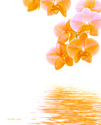 Reflect Art - Orchid background by Michal Bednarek