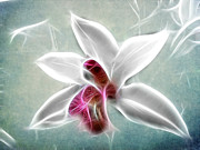 Orchid Blues Print by Paul and Fe Photography Messenger