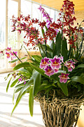 Chevalier Framed Prints - Orchid Bouquet Framed Print by Elizabeth Chevalier