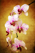 Clean Mixed Media Prints - Orchid Cascade Print by Andee Photography