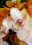 Golden Flowers Metal Prints - Orchid Delight         Metal Print by Kaye Menner