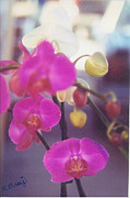 Robert Bray Metal Prints - Orchid Delight Metal Print by Robert Bray