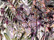 Ann Johndro-Collins - Orchid Dreams