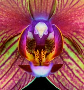 Leslie Crotty - Orchid Flower ...
