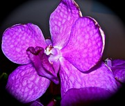 Randy Rosenberger - Orchid from Art Gallery