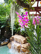 Orchids Prints - Orchid garden Print by Carey Chen