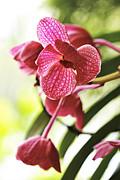 Orchid II Print by Pamela Gail Torres