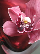 Epiphyte Metal Prints - Orchid in Red Glass Metal Print by Maureen J Haldeman