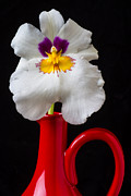Pretty Orchid Photos - Orchid in red pitcher by Garry Gay