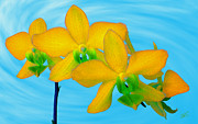 Orchids Digital Art Prints - Orchid In Yellow Print by Ben and Raisa Gertsberg