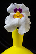 Pretty Orchid Photos - Orchid in yellow vase by Garry Gay
