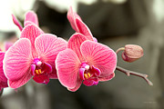 Mike Savad - Orchid - It takes two to tango