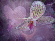 Judy Hall-Folde - Orchid