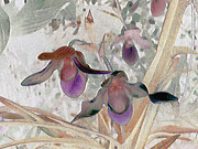 Ann Johndro-Collins - Orchid Light
