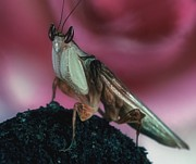 Etc. Art - Orchid Male Mantis  hymenop  Portrait  #7 of 9 by Leslie Crotty