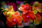 Vivid Colorful Flowers Prints - Orchid Melody Print by Karen Wiles