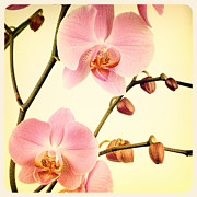 Orchids Art Posters - Orchid old photo Poster by Jane Rix