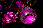 Orb Photos - Orchid Ornament by Nadya Ost