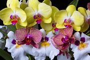 Pretty Orchid Photos - Orchid paradise  by Garry Gay